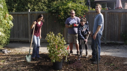 Volunteers planting a native hazelnut at Harcourt United Church.